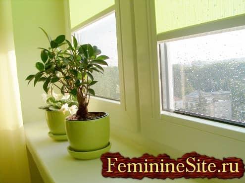 Интересуетесь, какая роль комнатных растений в жизни людей?