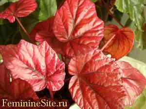 Растения Овна для души
