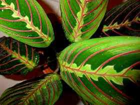Растения Водолея
