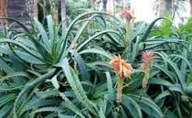 Растения Рака для души