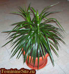 Растения Скорпиона для души