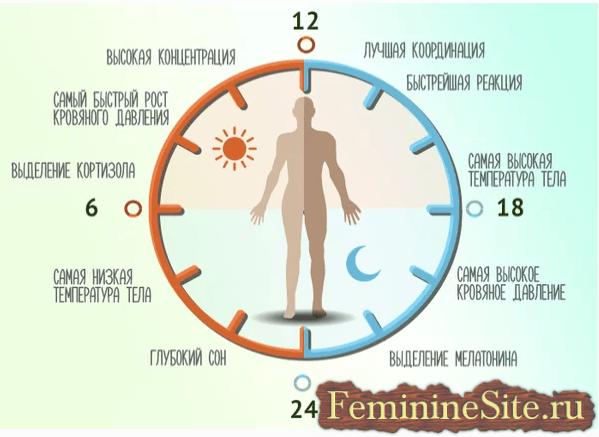 Мелатонин и цикл сна-бодрствования